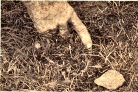 Si on est témoin de la présence d'un ovni, il est conseiller de prendre le plus de photos de l'endroit ou il s'est posé. Cet instantané a été pris près de Joliette, a la fin des années soixante, la ou un véhicule extraterrestre s'était brièvement posé sur le sol. On aurait constaté par la suite d'étranges émanation métalliques.